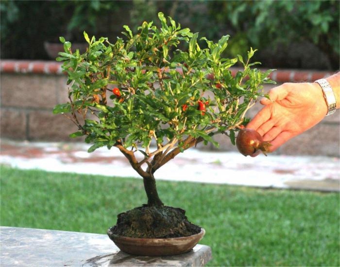 Выращивание деревьев в домашних условиях