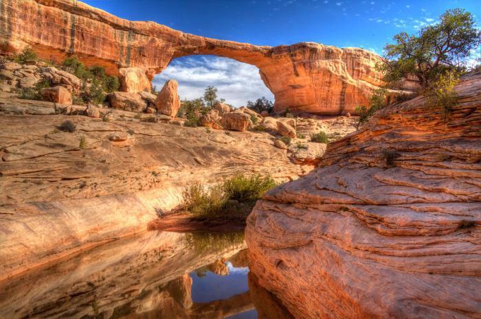 живые памятники природы