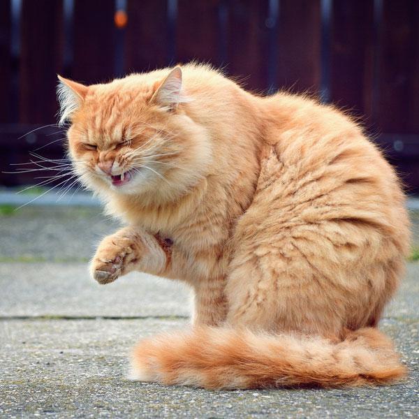 Почему кошка чихает? Узнаем! :: SYL.ru
