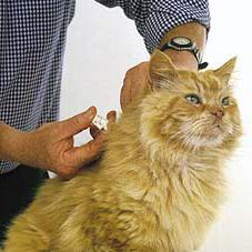 do cats need vaccinations