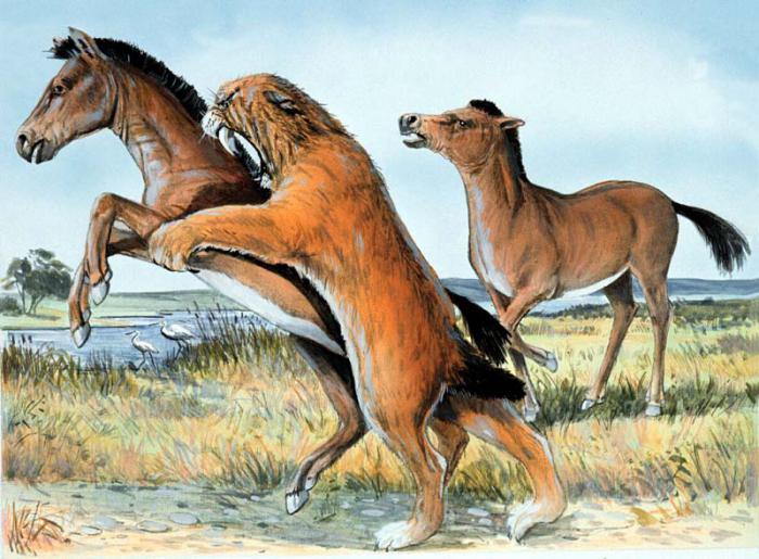 development of life in the Cenozoic era