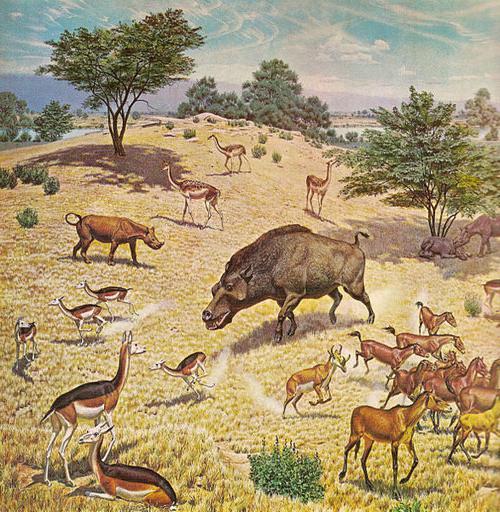 Фауна и флора рисунки