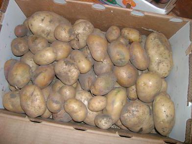 минимальная температура хранения картофеля