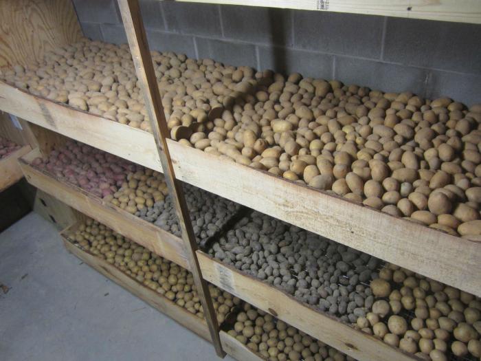 температура хранения картофеля в погребе