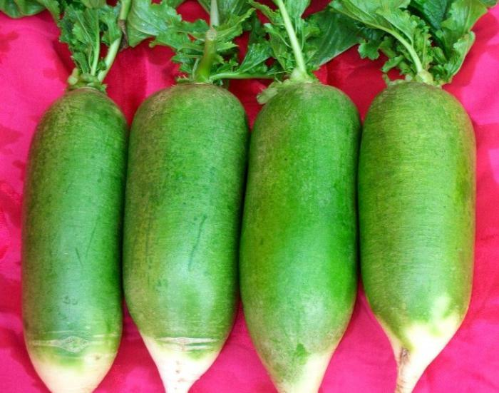 Редька зеленая рецепт