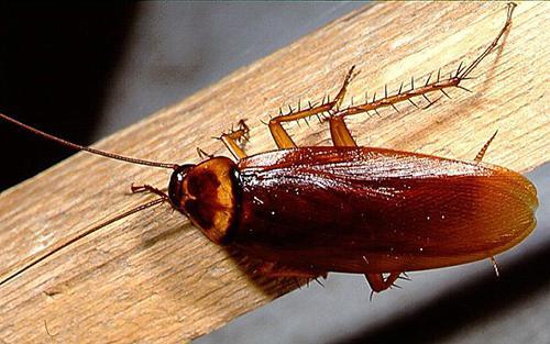 сонник тараканы во сне