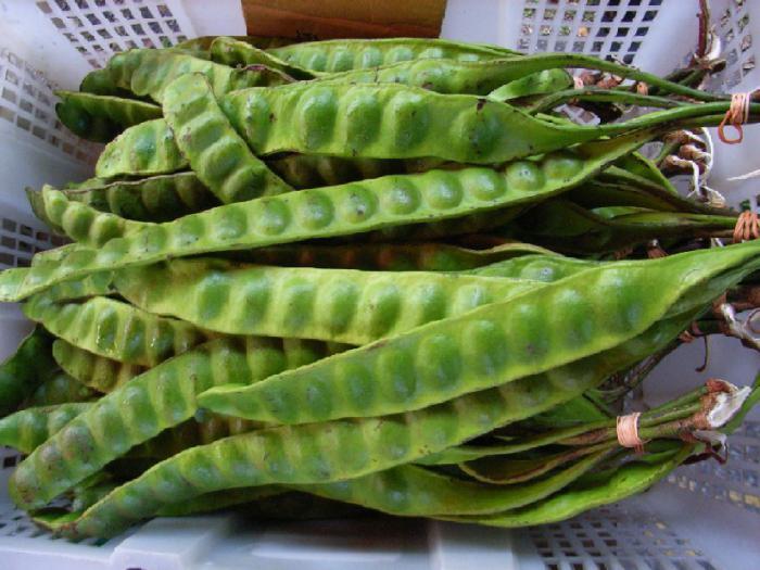 Fruits of legumes.
