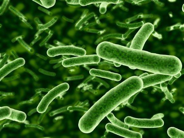 бактериальные инфекционные заболевания