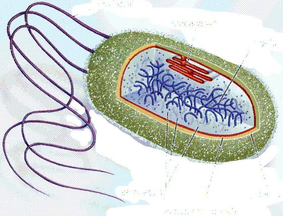 лечение бактериальных заболеваний