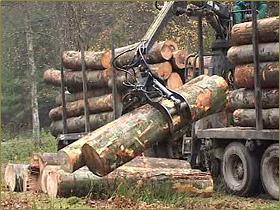 wood industry