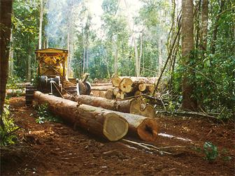timber and woodworking industry