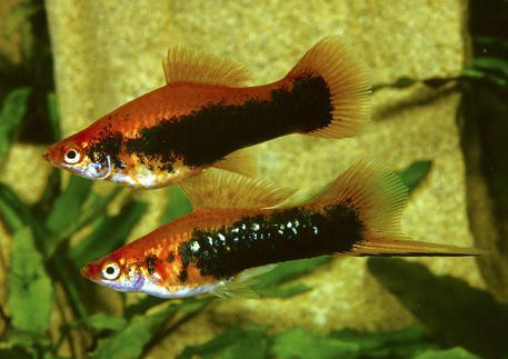 Аквариумные рыбки и рыбы: фото, названия, описание, виды ...