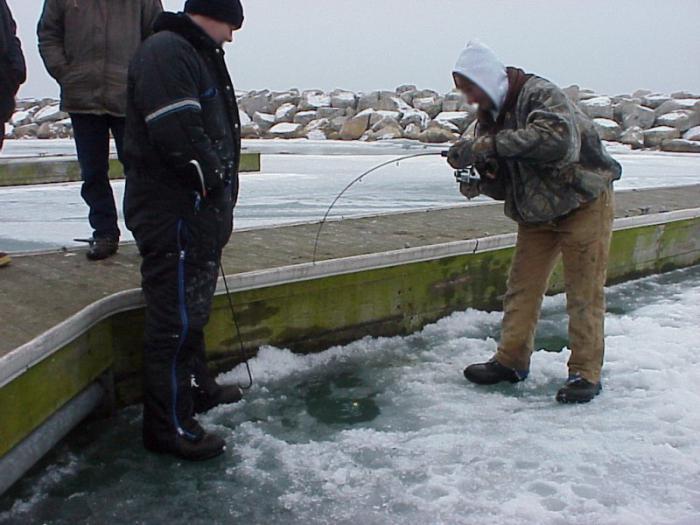 Как поймать живца, ловля живца зимой молявница. ловля живца зимой молявница Ловля живца малявницей имеет преимущество