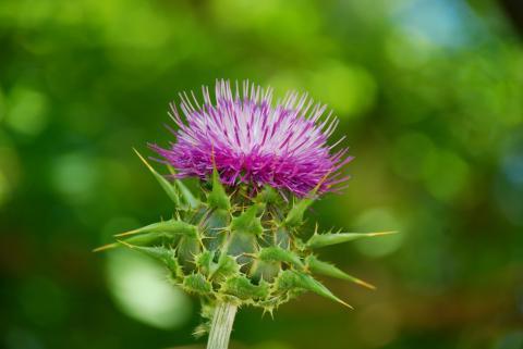 Средства для восстановления пигментации волос