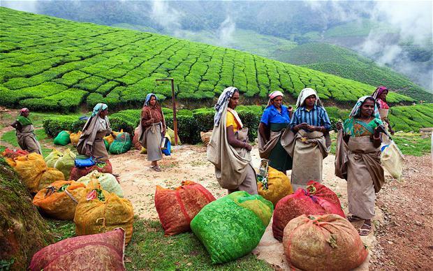 Картинки по запросу история индийского чая