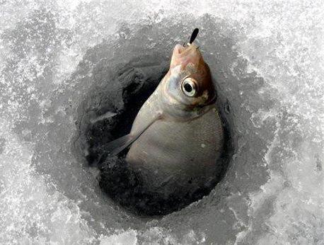 Winter bream fishing