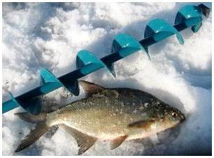 Our fishing Ukraine winter fishing bream