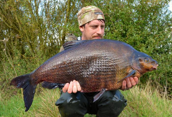 прикормка для рыбы весом 40кг