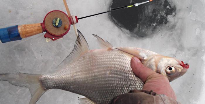 прикорм для рыбалки зимой
