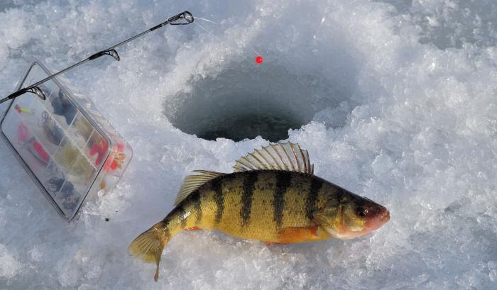 зимняя рыбалка на окуня снасти