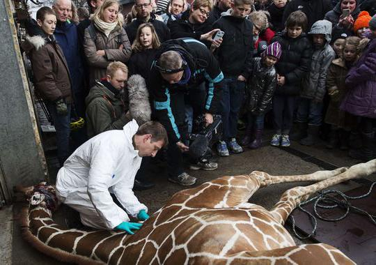 Article cruelty to animals