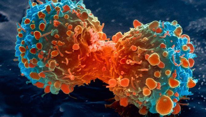 продукты убивающие паразитов в организме человека