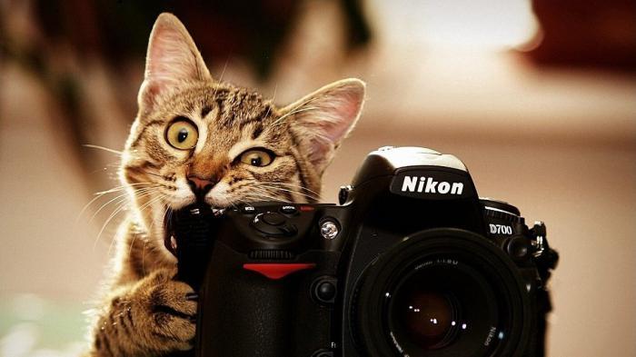 что нужно для профессии фотографа