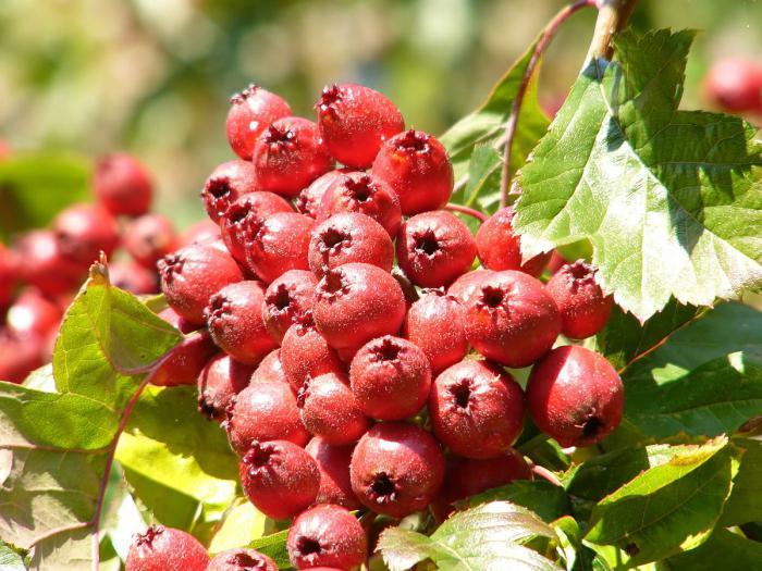 фрукты снижающие холестерин в крови таблица