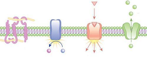 outer cytoplasmic membrane