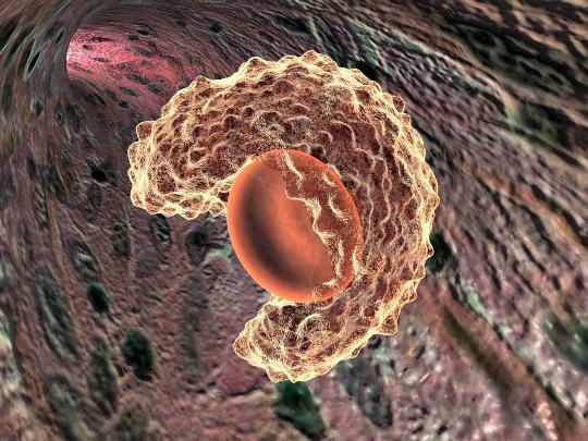 Нервные клетки восстанавливаются или нет?