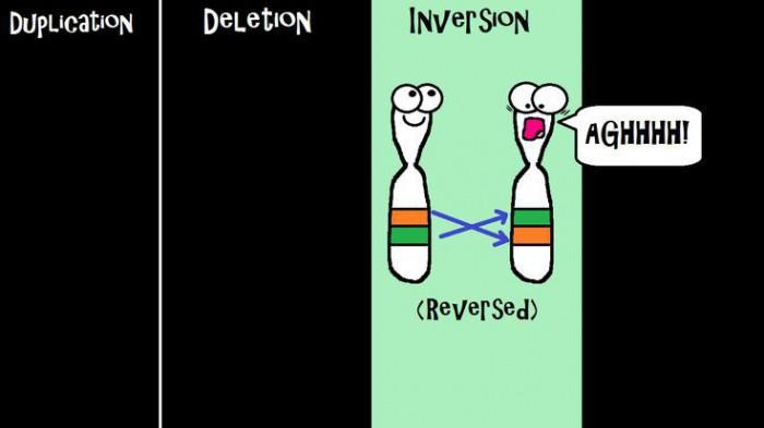 геномные и хромосомные мутации