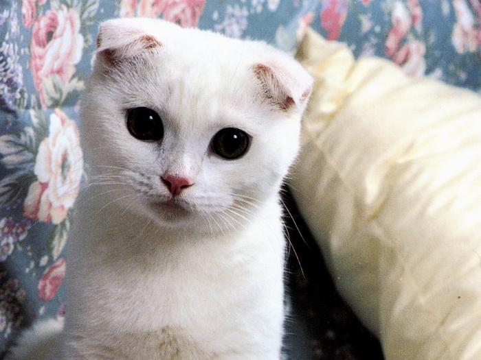виды аллергии на кошек