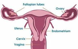 Anatomy of the female body with a photo