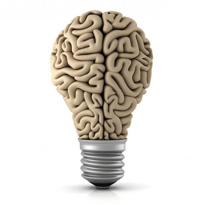 передний мозг