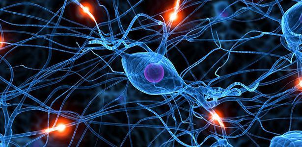 головной мозг передний мозг