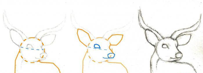 Нарисовать оленя схема