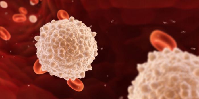 leukocytes in the blood rate