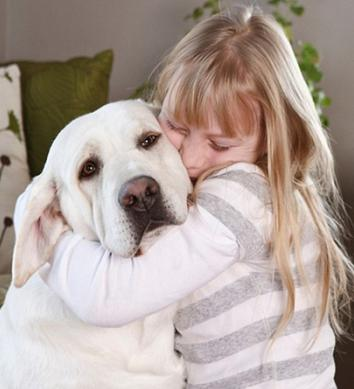 labrador breed description reviews