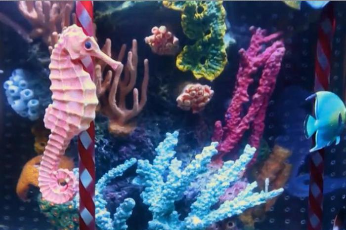 Neptune Aquarium in St. Petersburg