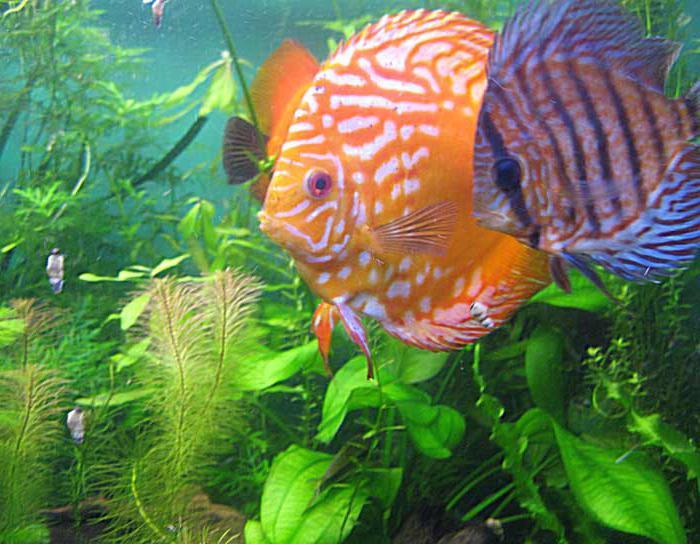new aquarium in st. petersburg