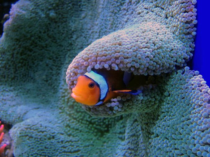 aquarium in st petersburg reviews
