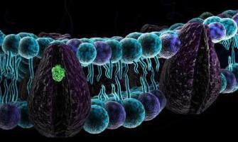 Картинки по запросу клеточная мембрана функции