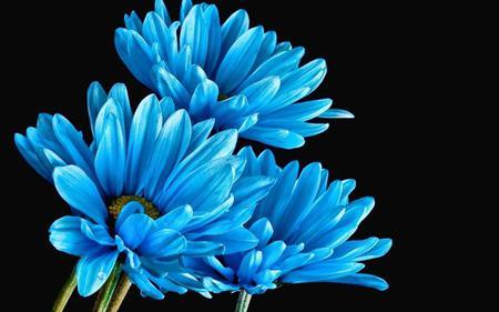 синие цветы названия