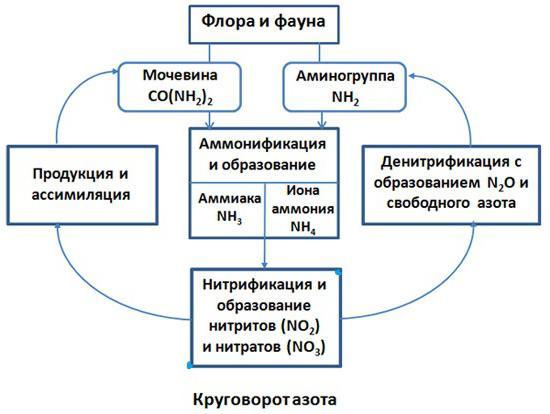 азота в природе схема