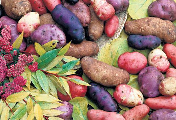 Как готовить сом с картошкой в духовке