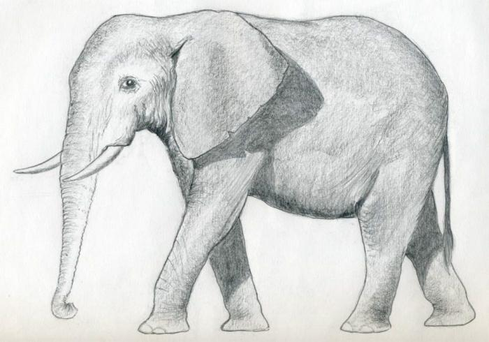 how to draw an elephant with a pencil