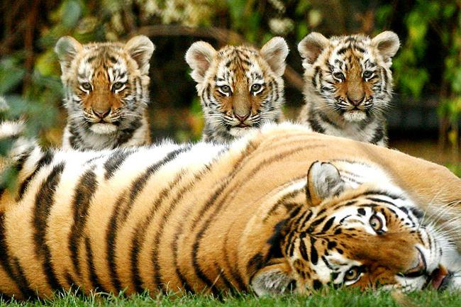 10 endangered animal species