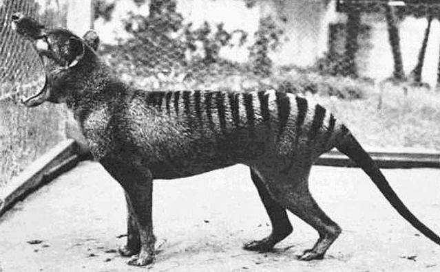 Extinct animal species photo
