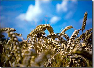 Картинки по запросу картинки ко дню сельхозработника