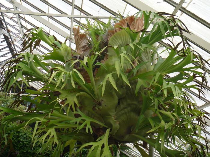 Photo of fern flower